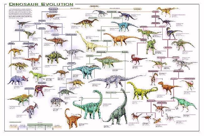 Type Of Dinosaurs Dinosaurs Evolution